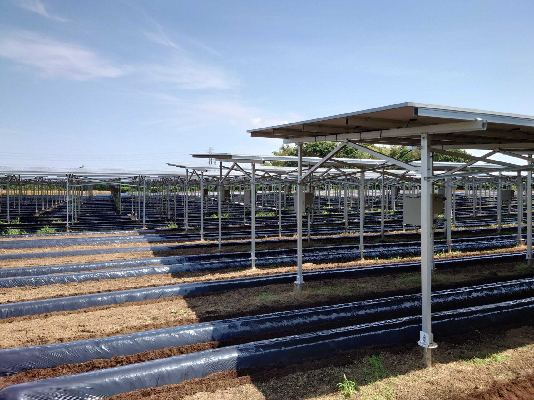 千葉県富里市にあるソーラーシェアリングの施設の写真